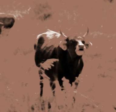 生肖属牛2013年12月运势