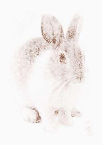 属兔的人2014年运程