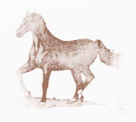 屬馬的人2014年運程