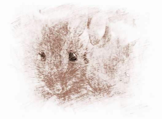 2016年属鼠人的全年运势