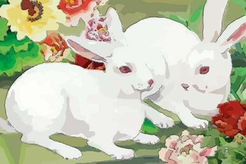 屬兔2020年運勢及運程刑太歲,2020年屬兔人的全年運勢