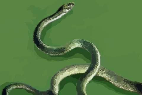 屬蛇人2020年健康平安運勢