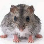 2008年属鼠人2020年运势运程女孩 08年出生12岁生肖鼠女佩戴什么吉祥物