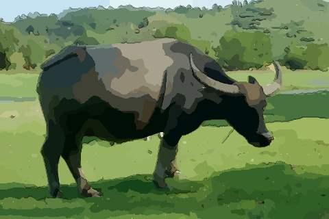1973年属牛的人2021年运势及运程,男女49岁生肖牛今年运气如何?