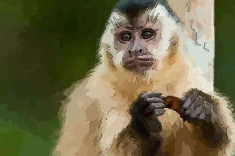 属猴2021年运势及运程如何,2021年属猴人的全年运势