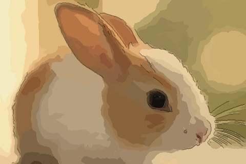 1975年属兔的人2021年运势及运程,男女47岁生肖兔今年运气如何?