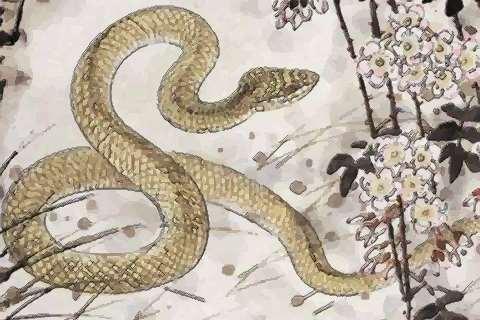 属蛇人2021年事业官运