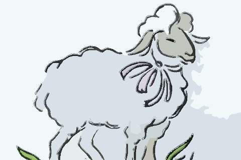 属羊人2021年感情运势