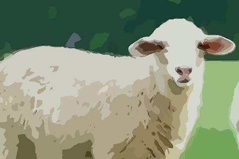 1979年属羊的人2021年运势及运程,男女43岁生肖羊今年运气如何?
