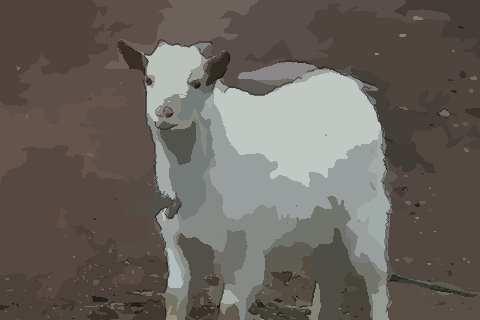 1967年属羊的人2021年运势及运程,男女55岁生肖羊今年运气如何?