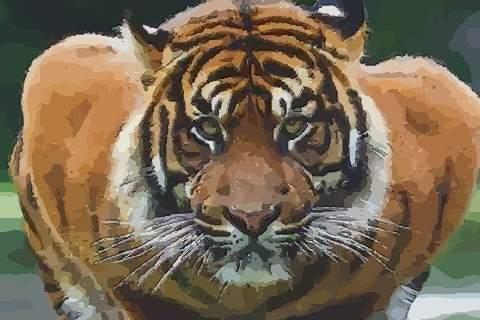1986年属虎的人2021年运势及运程,男女38岁生肖虎今年运气如何?