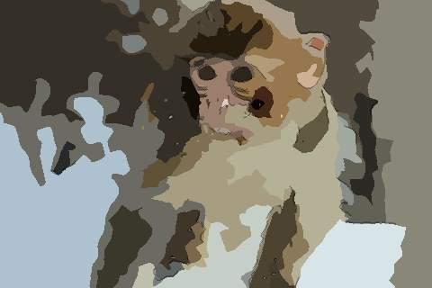 属猴人2021年健康平安运势