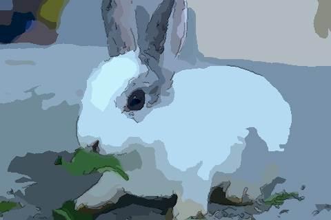 属兔人2021年事业官运