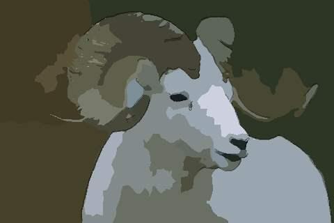 属羊2021年运势及运程冲太岁,2021年属羊人的全年运势