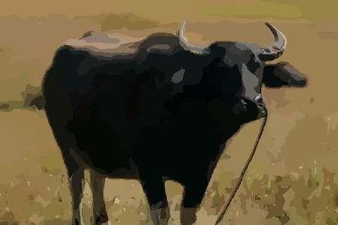 1985年属牛的人2021年运势及运程,男女37岁生肖牛今年运气如何?