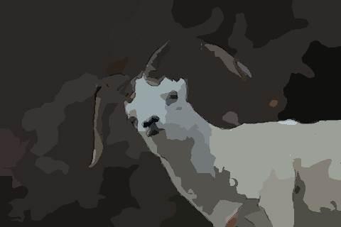 1991年属羊的人2021年运势及运程,男女31岁生肖羊今年运气如何?