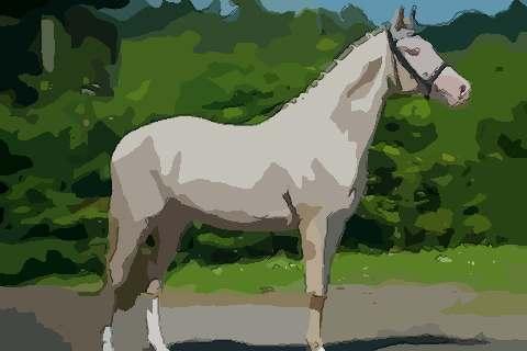 1978年属马的人2021年运势及运程,男女44岁生肖马今年运气如何?
