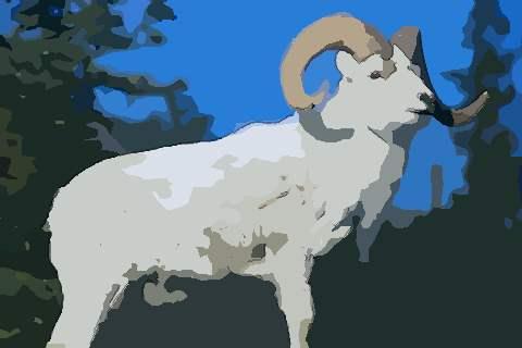 属羊人2021年财运运势