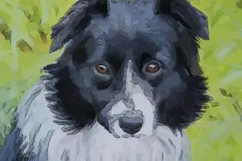 属狗2021年运势及运程刑太岁,2021年属狗人的全年运势