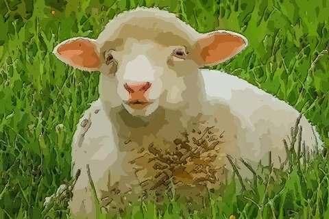 属羊人2021年事业官势