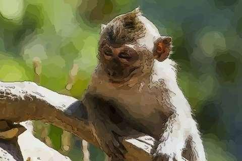 属猴人2021年财运运势