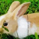 属兔2021年运势及运程如何,2021年属兔人的全年运势