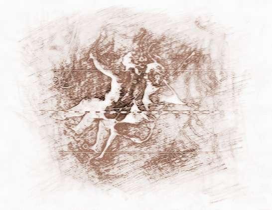 双子叶根的初生结构图片