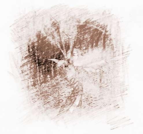 木星星座巨蟹座双鱼座唱歌适合吗图片