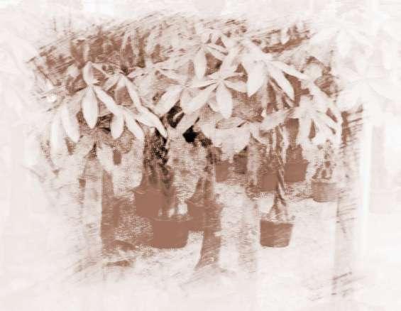 店内招财植物摆放风水