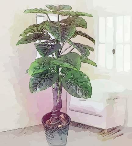 例如比较大的植物,可摆放在客厅入口处