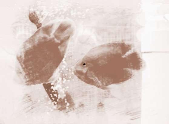风水鱼如何摆放,风水鱼放在什么位置最好图片