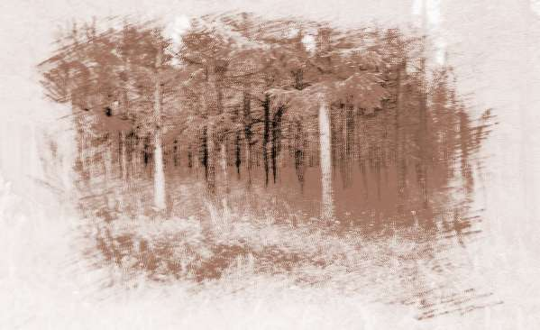 五行木代表顏色