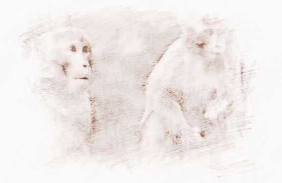 属猴的属相婚配表,属猴的和什么属相最配