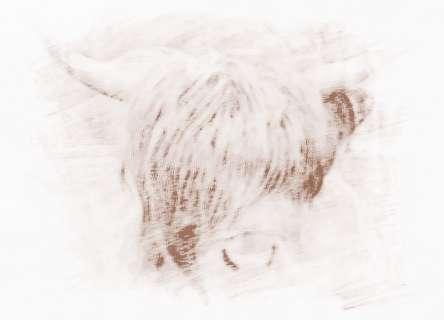 属牛的属相婚配表,属牛的和什么属相最配
