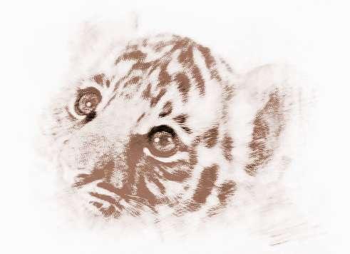 属虎的属相婚配表,属虎的和什么属相最配