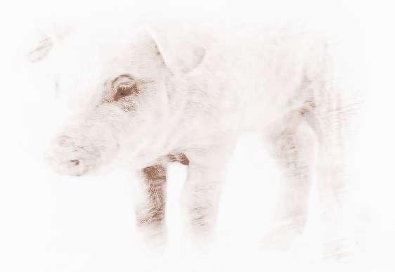 属猪的属相婚配表,属猪的和什么属相最配