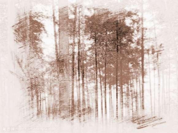 竹子与风水