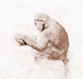 梦见猴子拉屎是什么意思