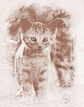 找出图片中隐藏的猫