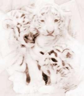 梦见三只老虎
