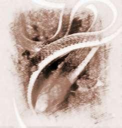 梦见彩色蛇