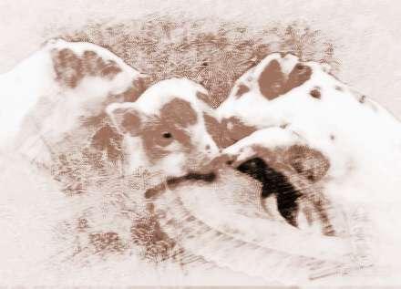 梦见小猪会说话的解析 梦见小猪会说话意味着:运程平平