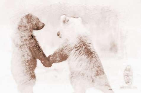 两只动物拥抱图片