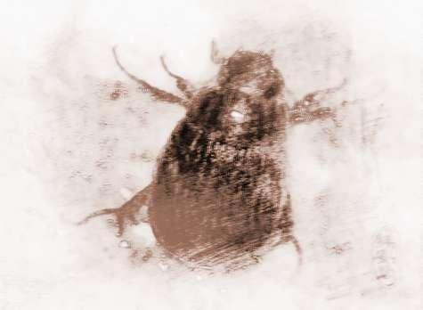 做梦梦见黑色虫子_梦到黑色虫子