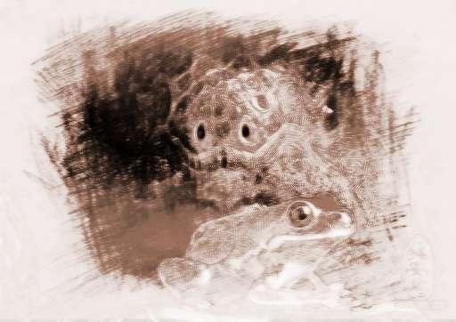 """周公解梦 动物 > 梦见乌龟青蛙        周公解梦关于""""乌龟青蛙""""的解释"""