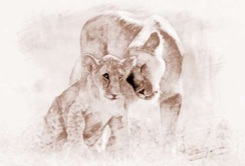梦见狮子追我
