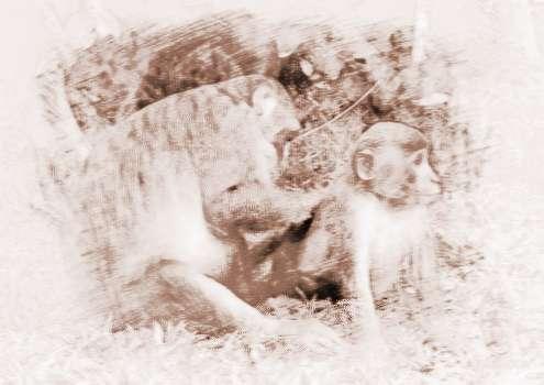 梦见两只猴子 周公解梦之梦到两只猴子