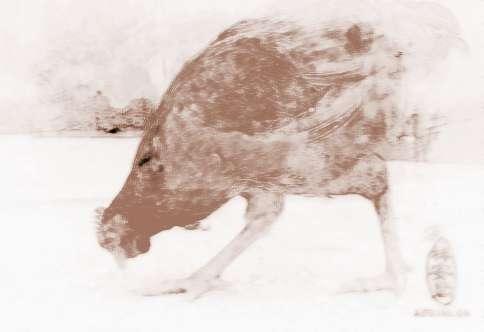 描写小动物吃食的样子