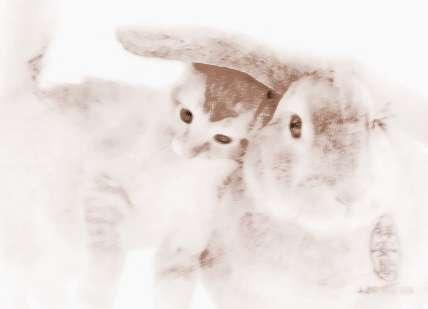 做梦梦见兔子和猫_梦到兔子和猫