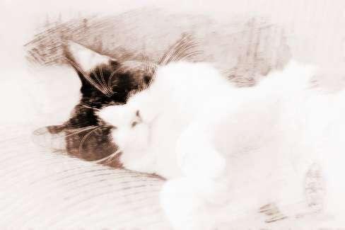 梦见猫上床 周公解梦之梦到猫上床